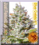 Barneys Blue Gelato 41 Cannabis Seeds Feminized